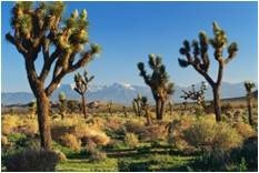 Desert landscape represents concept of the value of green infrastructure for a range of watersheds.