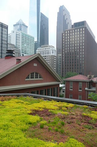 Green roof in a city