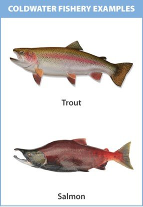 Photo of a trout and a salmon