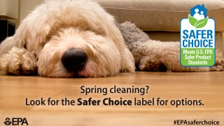 sleeping dog with the Safer Choice label