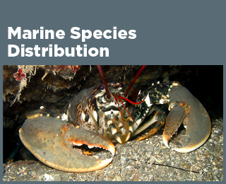 Marine Species Distribution