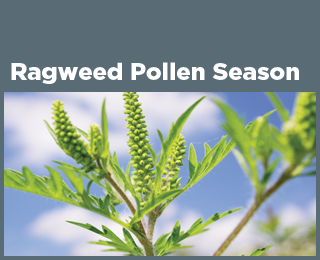 Ragweed Pollen Season