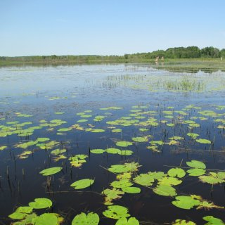 Recently restored Great Lakes coastal wetland within the estuary