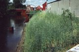 Riverbank Behind Building 68 PCB Spill Area - Sheetpile Containment Wall in Background