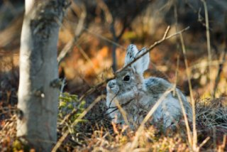 A rabbit sits in a forest