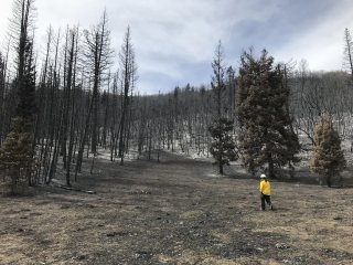 Walking through a forest area burned over by the Pole Creek wildfire.