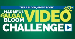 See A Bloom, Give It Room: Harmful Algal Bloom Video Challenge